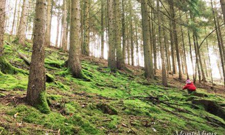 Eine Woche Urlaub im Sauerland – Natur Pur!