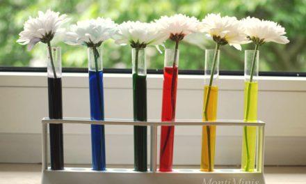 Regenbogenblumen  – Experimentieren mit Farben