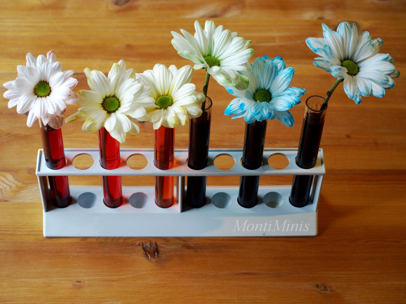 Ausgezeichnet Blumenexperiment Mit Lebensmittelfarbe Galerie ...