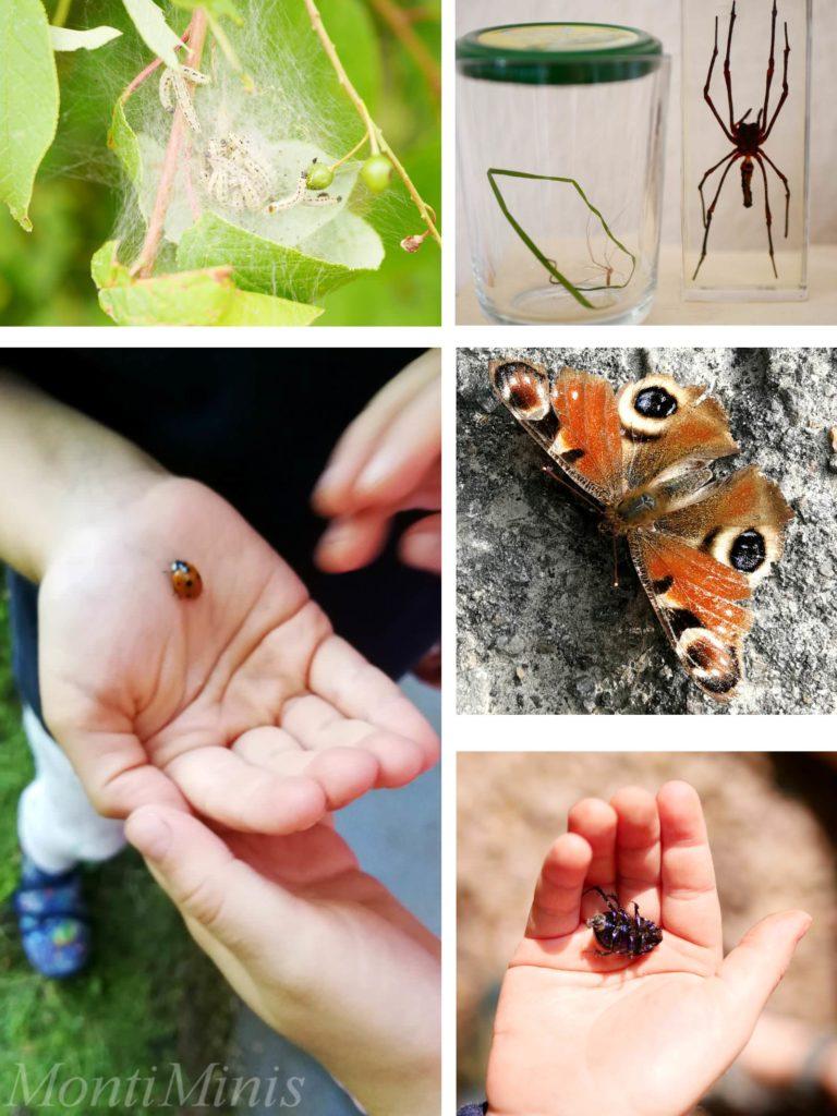 materialien zum thema insekten für kinder  montessori
