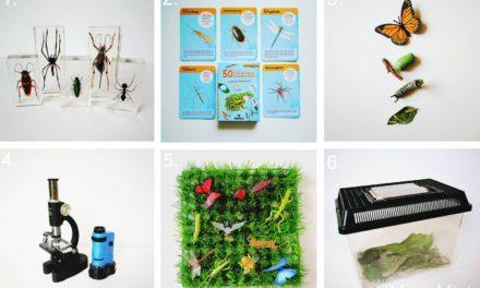 Materialien zum Thema Insekten für Kinder