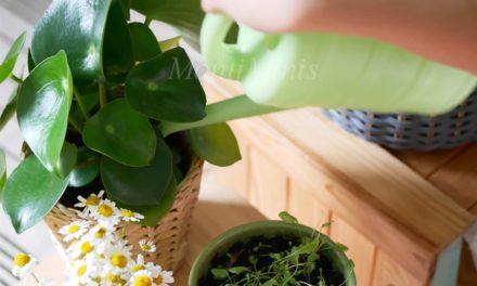 Pflanzenpflege mit Kindern – Von Verantwortung und Achtsamkeit