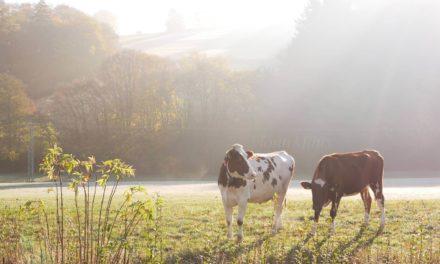 Kleine Auszeit in der Natur – Unser Familienurlaub im Sauerland