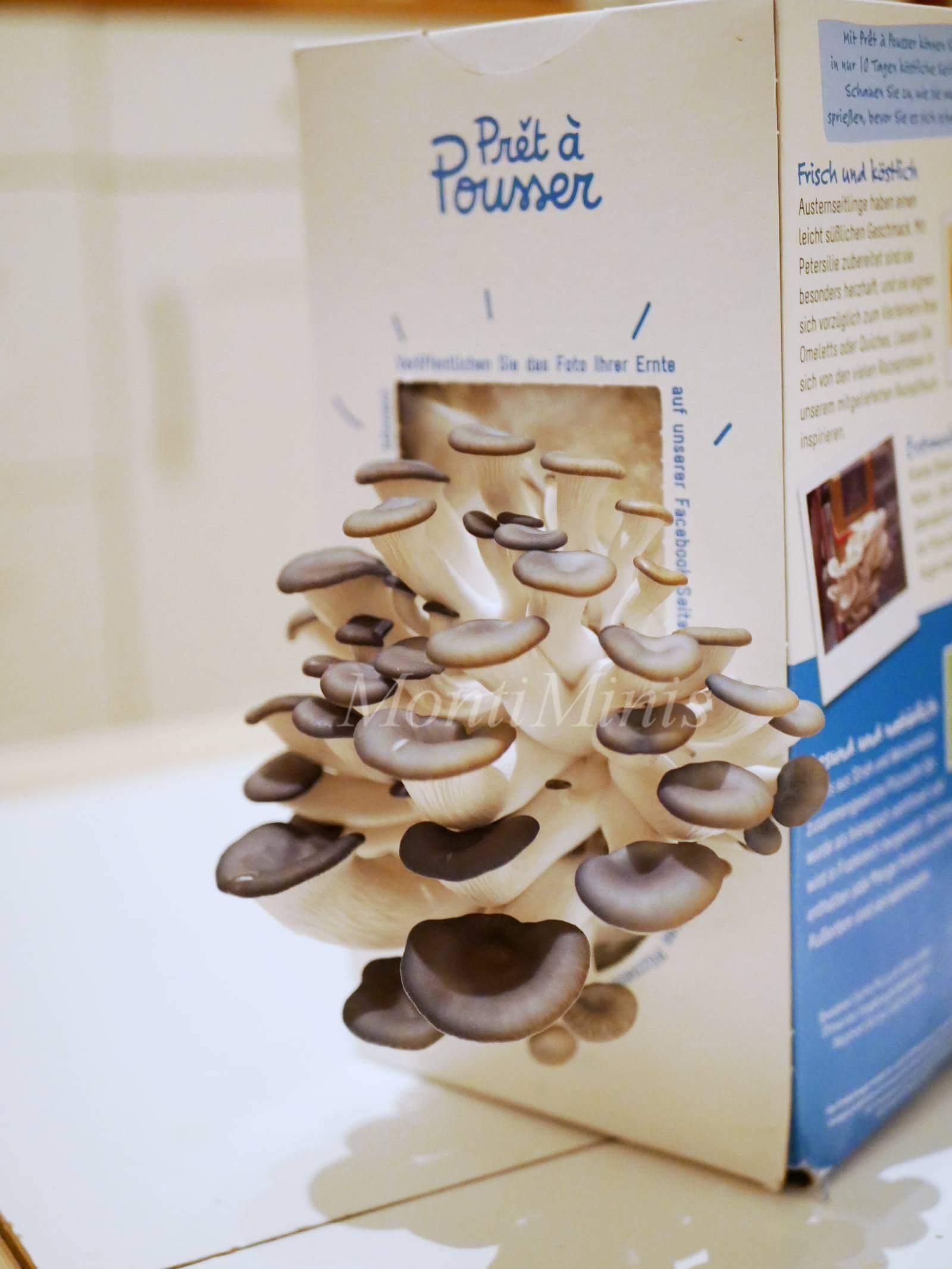 Montessori zu Hause: Pilze züchten - ein einfaches Experiment für Kinder. Selbst Pilze anbauen. Pilzzucht Set. Pilzpaket | MontiMinis.com