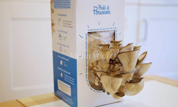Pilze züchten – Ein einfaches (und obendrein essbares!) Natur-Experiment für Kinder
