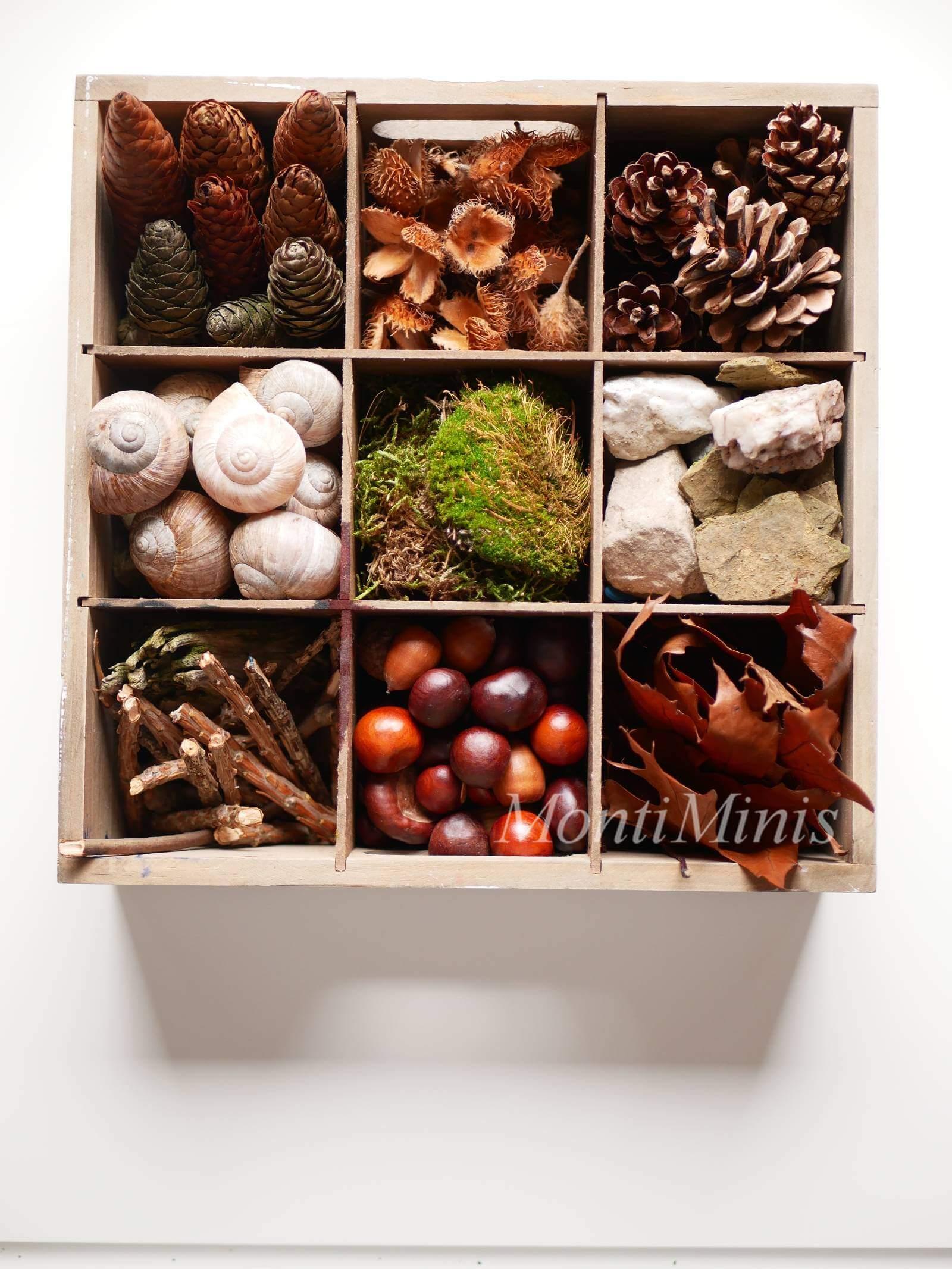 Eine Kiste mit Naturschätzen: unendlich viele Möglichkeiten zum Spielen, Forschen und kreativ sein, Basteln mit Naturschätzen, Naturkinder, Montessori Zuhause | MontiMinis.com