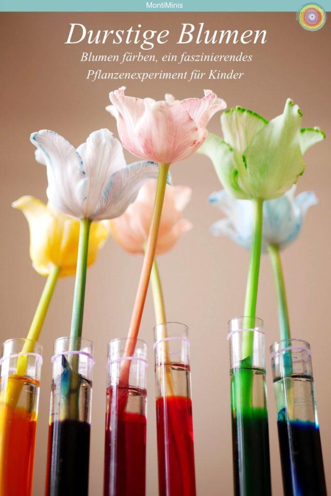 Ein einfaches Experiment mit Kindern: Die durstige Blume - Blumen färben mit Lebensmittelfarben, Frühlingsideen für Kinder, Pflanzenexperiment, Naturexperiment, Naturkinder, Montessori Zuhause |Montessori Blog MontiMinis.com