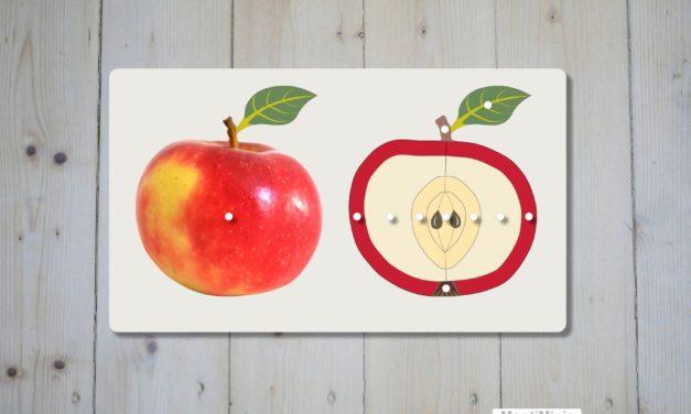 Der Apfel & Apfelsorten : Druckvorlagen zum Spielen und Lernen