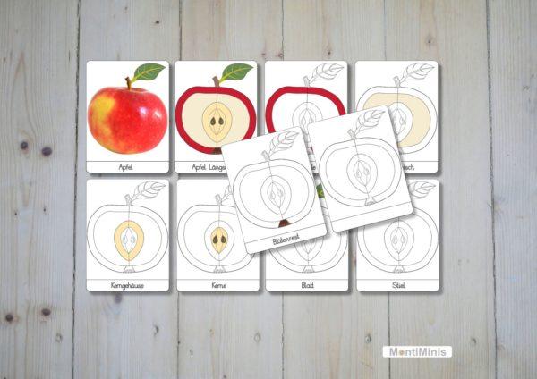 Montessori diy-Puzzle Teile des Apfels Unterrichtsmaterial Biologie Montessori Zuhause upcycling pappe montiminis