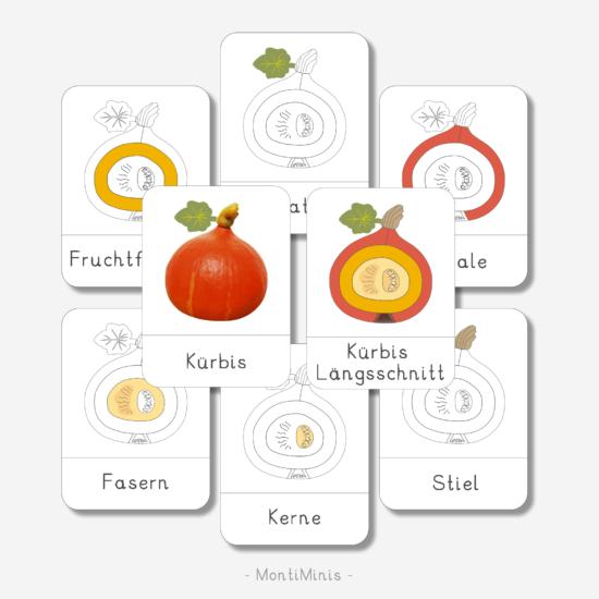 Kürbis Nomenklatur- und Faktenkarten, Herbst Spielidee für Kinder, Unterrichtsmaterial Biologie, Montessori inspiriert - MontiMInis